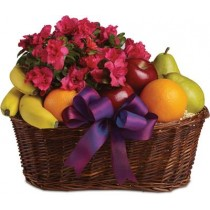Fruit & Pot Basket