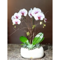 Orchid Planter 6