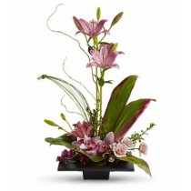Imagination Blooms with Cymbidium Orchids